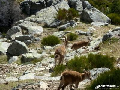 Guadarrama;Pico de la Najarra-nieve y montañas cantabricas fotos de san juan de gaztelugatxe turism